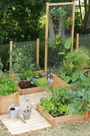 Unusual Vegetable Garden Ideas For Home Backyard 01