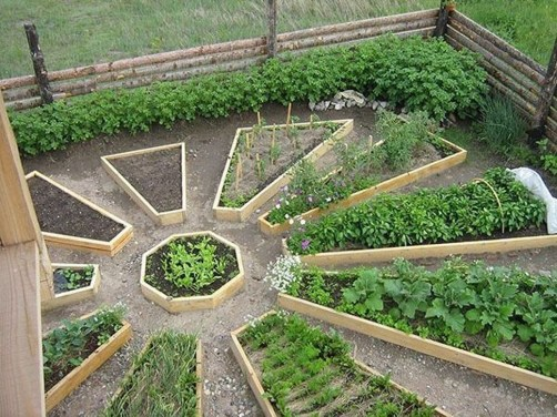 Unusual Vegetable Garden Ideas For Home Backyard 10