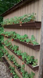 Unusual Vegetable Garden Ideas For Home Backyard 15