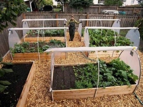 Unusual Vegetable Garden Ideas For Home Backyard 25