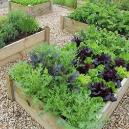Unusual Vegetable Garden Ideas For Home Backyard 28