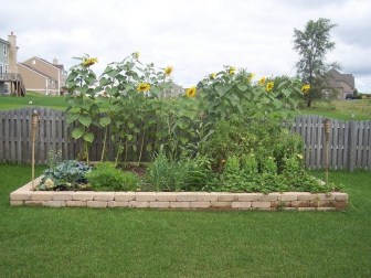 Unusual Vegetable Garden Ideas For Home Backyard 31