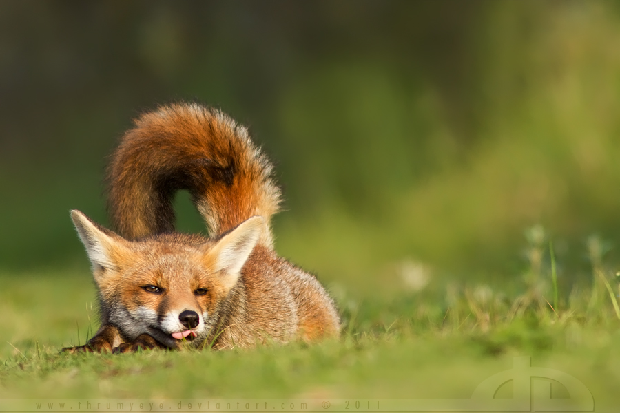 life captured photography of animal 14