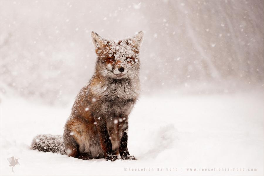 life captured photography of animal 9