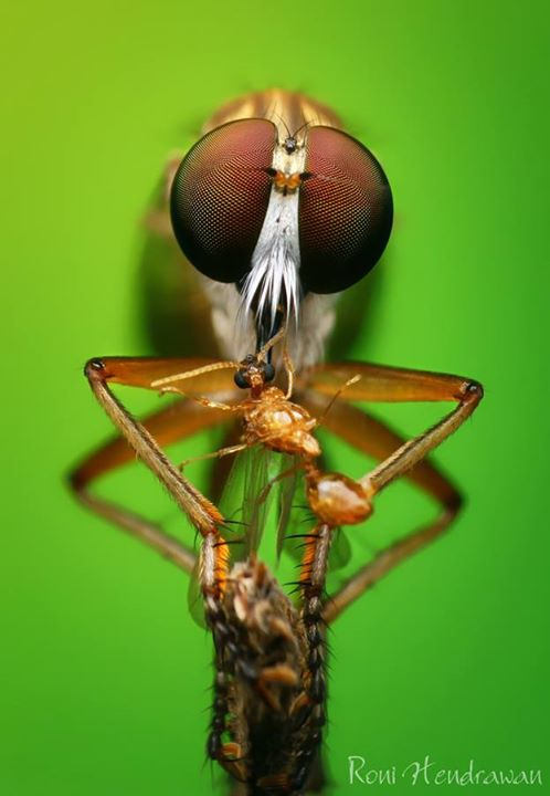 Amazing macro photography of insect
