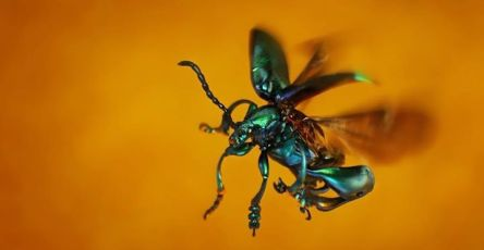 Easy Macro Photography Tips And Tricks for Great Results