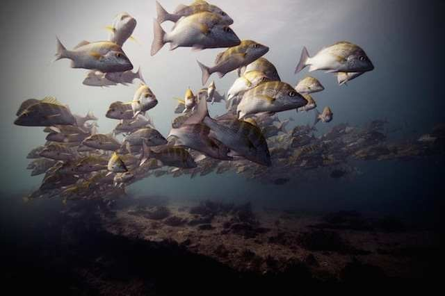 Brilliant Underwater Photography 5
