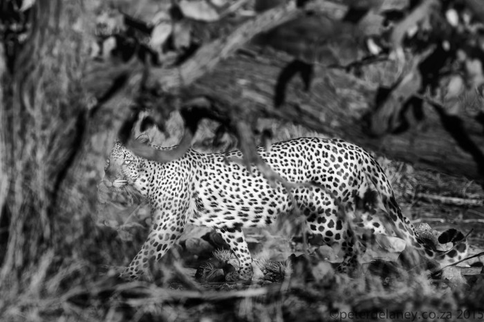 Wonderful Black and White Animals Photography