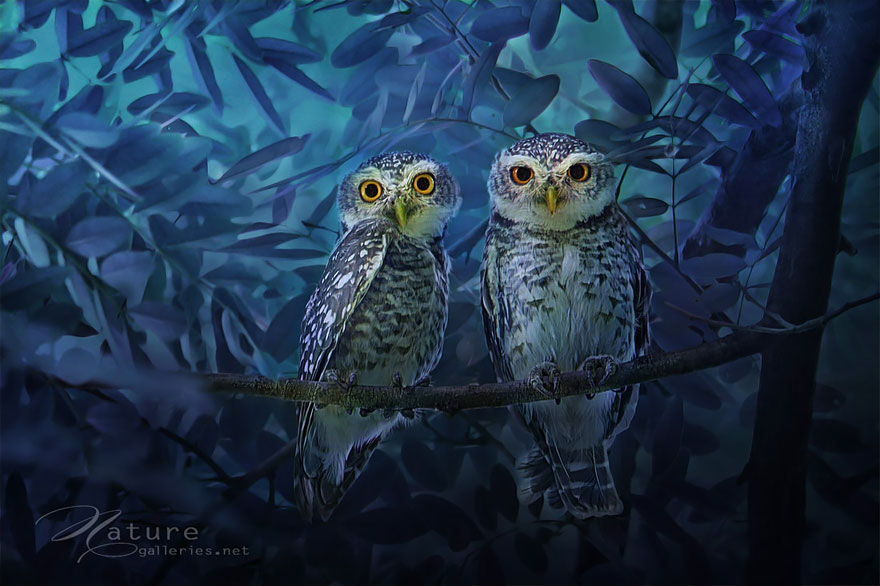 best owl photography captures 7