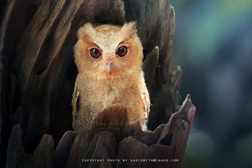 best owl photography captures 8