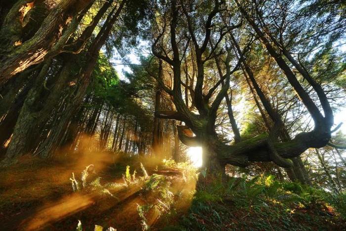 Amazing forest lanndscape photography 01