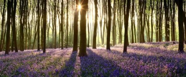 Amazing lanndscape photography of Nature
