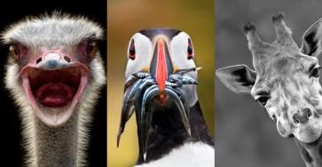 Splendid Wild Animals Photography by Marina Cano