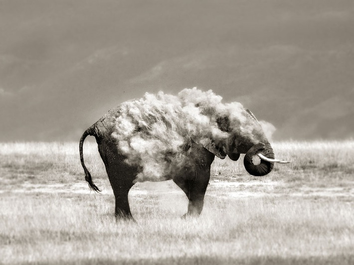 Black & white wild animals photography by Marina Cano 01