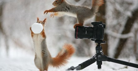 Adorable Squirrel Poses Photography by Vadim Trunov