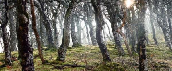 Wonderful forest lanndscape photography 01