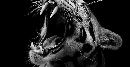 Wonderful Monochrome Animal Photography by lukas holas