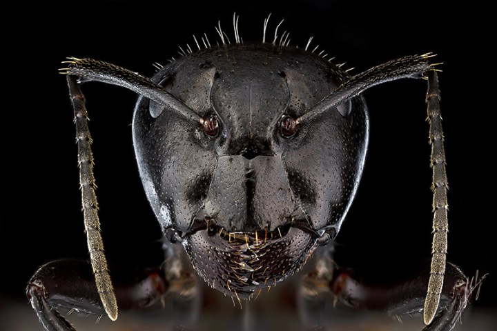 Detailed-Macro-Photography-Insect-by-Paulo-Lat+úes-02