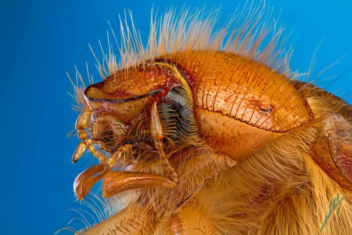 Extreme-Insect-Macro-Photography-by-Paulo-Lat+úes-01-1024x683