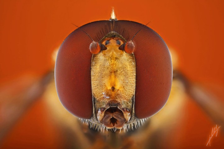 Extreme-Macro-Photography-of-Insect-by-Paulo-Lat+úes-01-1024x683