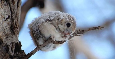 Flying Squirrels Are Probably The Cutest Animals On Earth