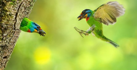 Wonderful Bird Photography – 25 Stunning Examples