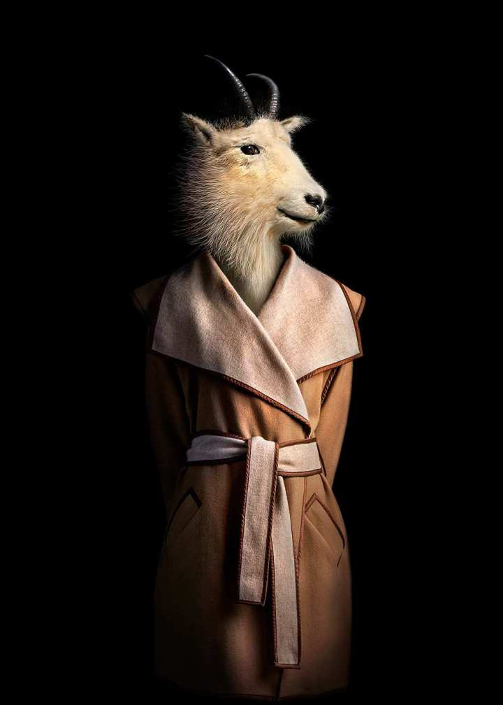 Animals Dressed in Contemporary Outfits by Miguel Vallinas 04