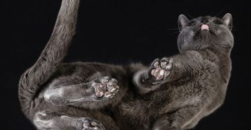 Cute Cat Photograph From Underneath by Andrius Burba 04