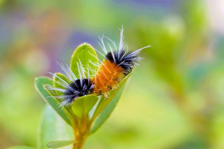 A caterpillar curled up inside a plant is captured by Renae Smith