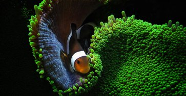 15 Beautiful Examples of Underwater Photography