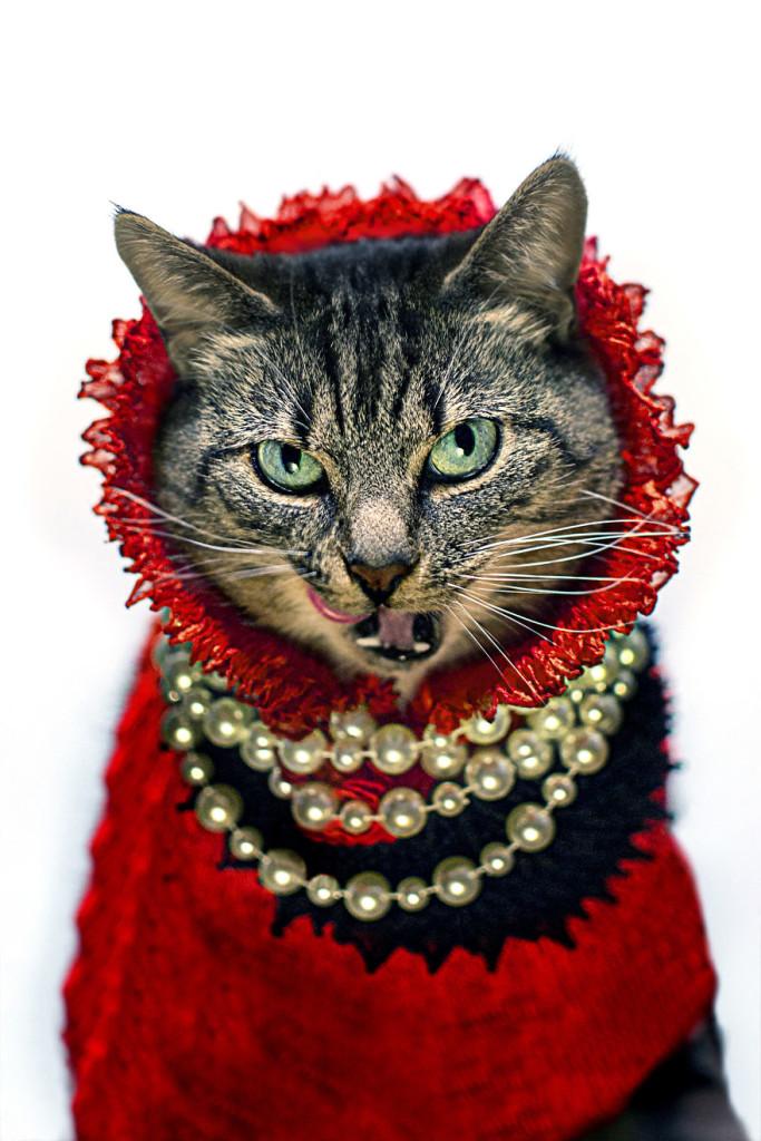 Cat Diagnosed With Feline Leukaemia Turned Into A Fashion