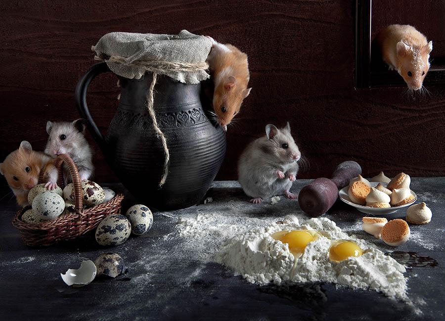Cute photos of hamsters life by Elena Eremina 99