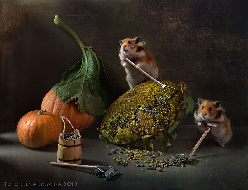 Funny Photography of Hamster Life 99