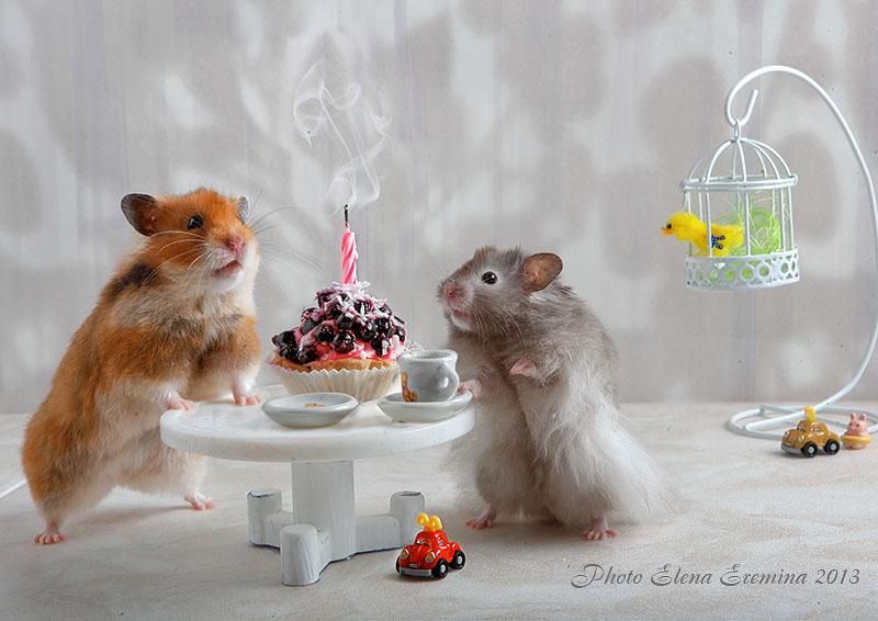 Funny photos of animals life by Elena Eremina 99