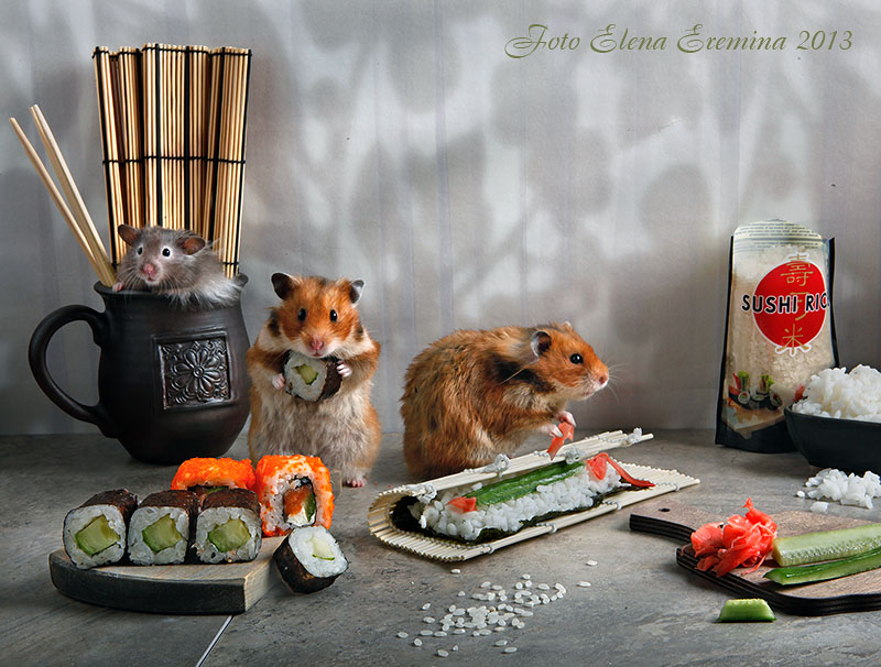 Humorous photos of hamsters life by Elena Eremina 33