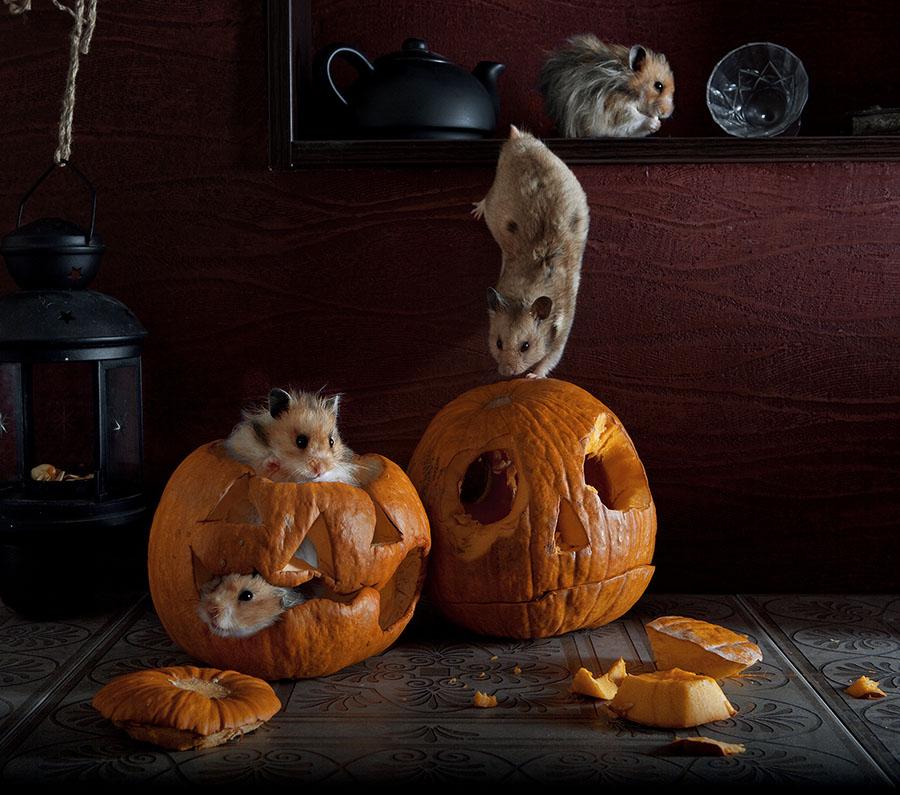 Humorous photos of hamsters life by Elena Eremina 99