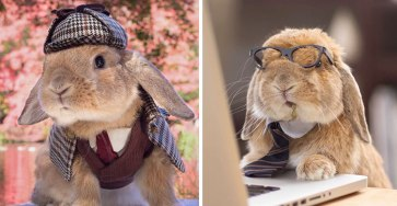 PuiPui, The World's Most Stylish Bunny 33
