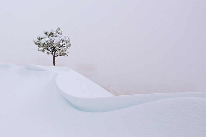 During a snow storm I decided to head over to Bryce Canyon NP and enjoy the freshly fallen snow. Visibility was down to almost zero, but then I found this single tree right next to a snow drift and knew this would be my shot.