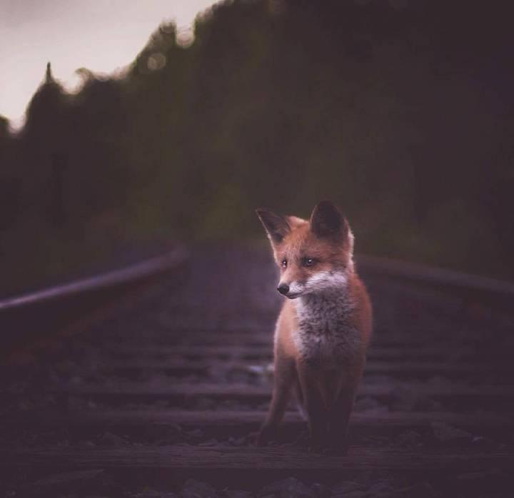 Best Capture of the Wild Animals by Konsta Punkka 77