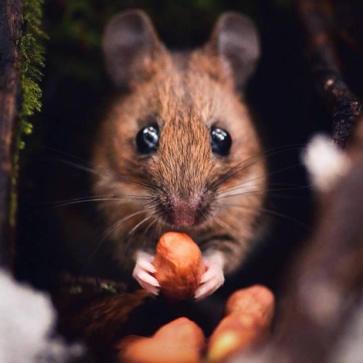 Stunning Capture of the Wild Animals by Konsta Punkka