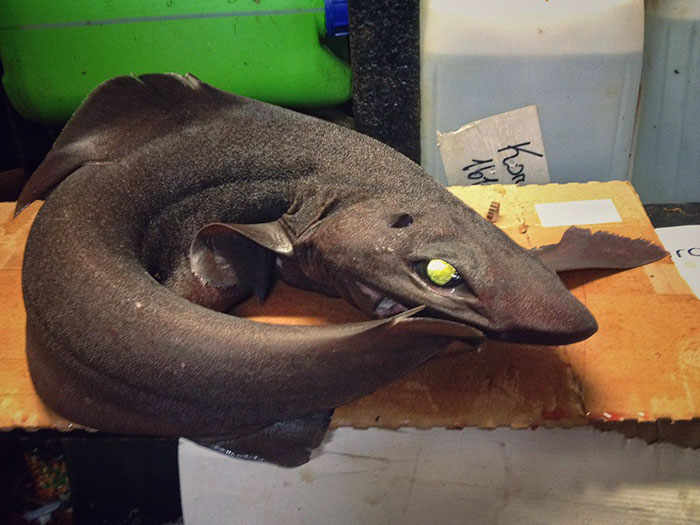russian-fisherman-posts-terrifying-creatures-of-the-deep-sea-11