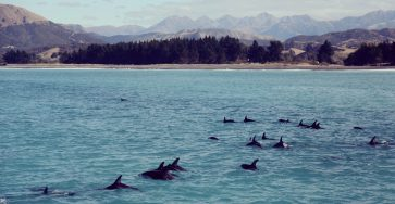 Dreamlike Pictures of a One-Month Trip in New Zealand