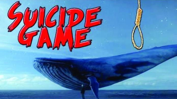 blue whale facts game news in hindi