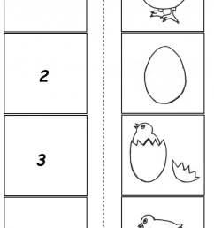 Chicken Life Cycle Worksheet Worksheets   99Worksheets [ 1238 x 700 Pixel ]