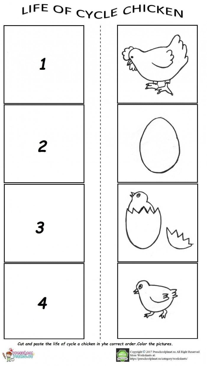 medium resolution of Chicken Life Cycle Worksheet Worksheets   99Worksheets