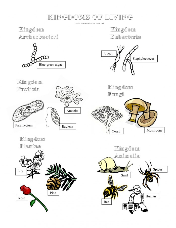 Single-Cell Organisms: Life Science Coloring Worksheets