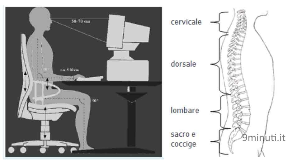spinaDorsale