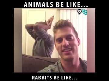 Animals be like