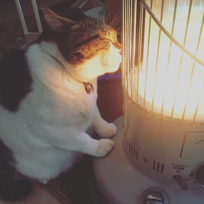 Cat-Falling-In-Love-With-A-Heater-During-Cold-Weather-9Mood-3