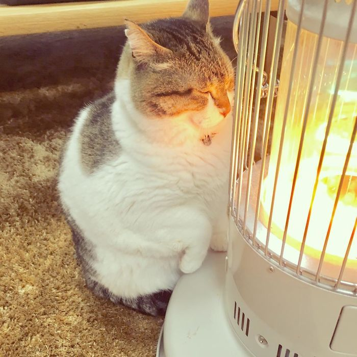 Cat-Falling-In-Love-With-A-Heater-During-Cold-Weather-9Mood-5